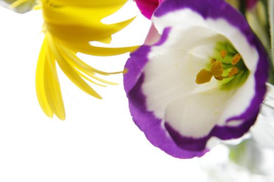 トルコ桔梗 2.jpg
