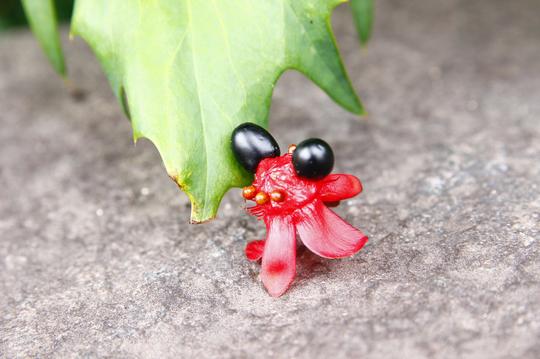 ミッキーマウスの木(オクナ・セルラタ) 5-4l.jpg