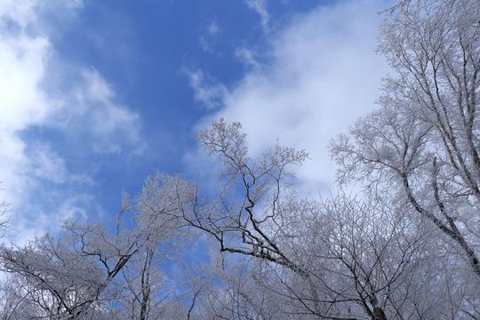樹氷2l.jpg