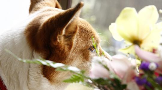 犬とシンビジウムl.jpg