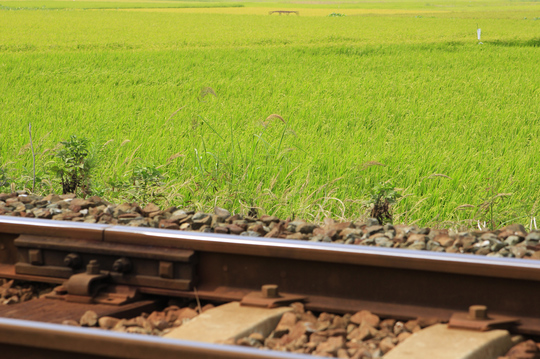 線路と稲穂.jpg