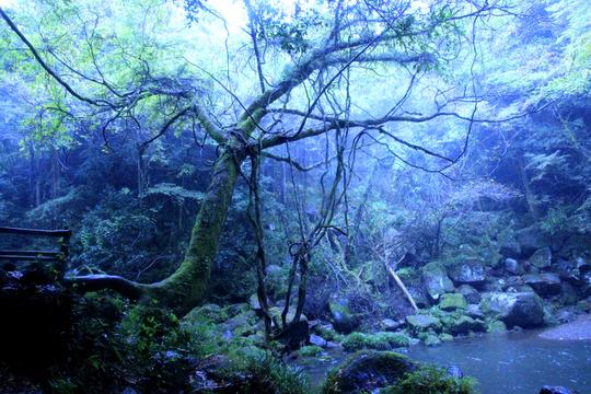 鍋ヶ滝 6l.jpg