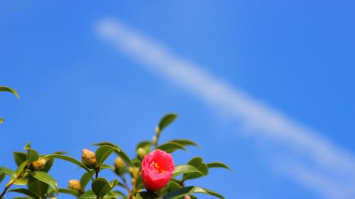 飛行機雲l.jpg